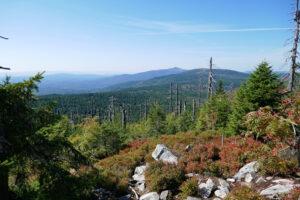 Read more about the article Bayerischer Wald | Über die Himmelsleiter auf den Lusen