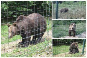 Rumänien Tag 6 – Bärenreservat und Fogarascher Berge