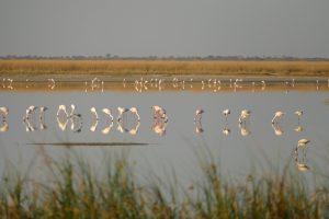 Afrika 2017: Fahrt nach Nata und in die Makgadigadi-Salzpfannen