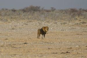 Afrika 2017: Vom Etosha-Nationalpark nach Okahandja