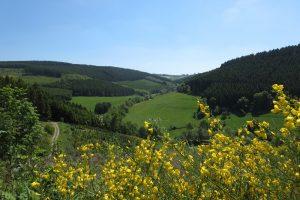 Sauersteig – Wilde 13 – Wildewiese