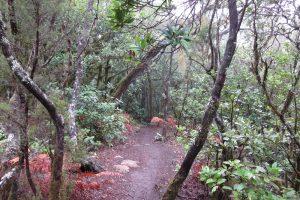 La Gomera – Mystische Wanderung durch den Nebelwald